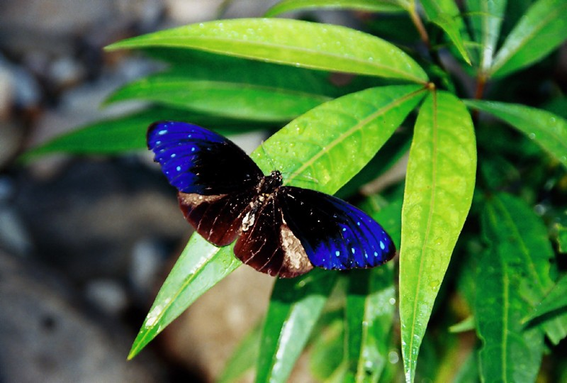 butterfly in borneo jungle