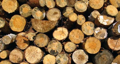 Naturskyddsföreningen vill skydda skogen