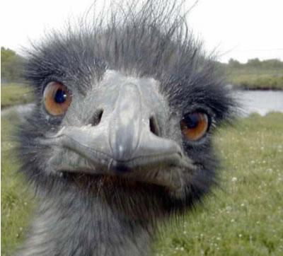 ostrich743207.jpg