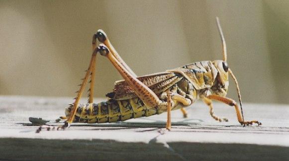 Insekterna har landat