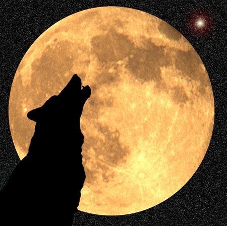 wolf moon 55631052