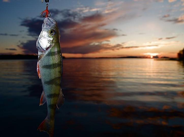 Bild från mälaren med fisk
