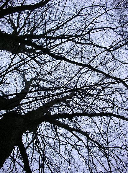Svarta träd