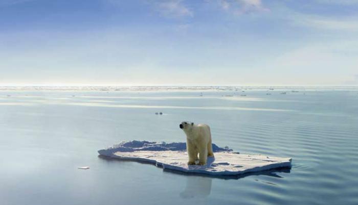 isbjörnpåflak1