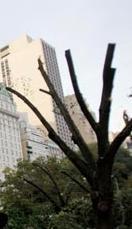 Träd i CP NY