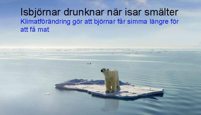 isbjörnpåflak 2