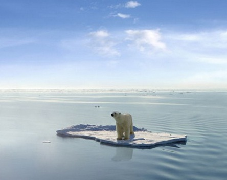isbjörn på fejkflaket