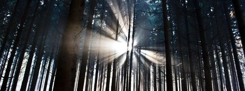 Hessische Wälder