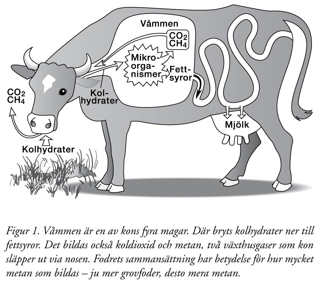 hur produceras kött