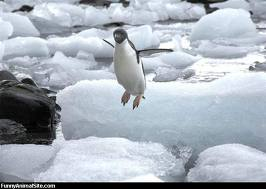 hoppande pingvin