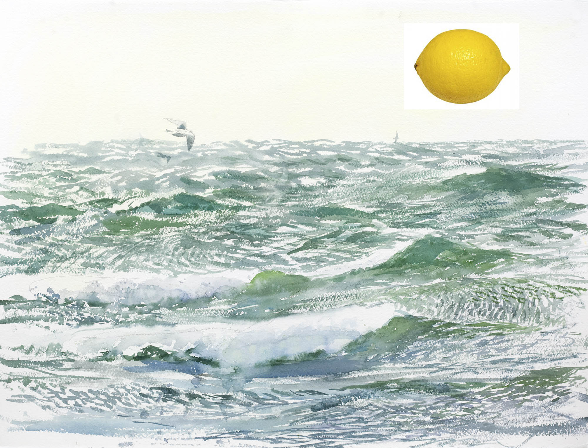 försurning av havet