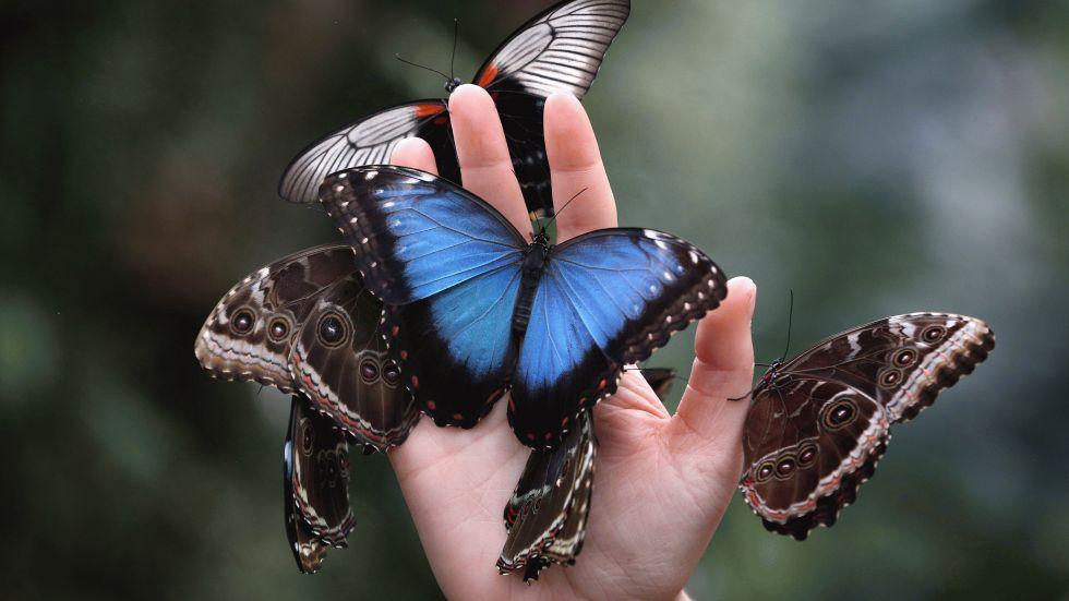 butterfly-2113_980x551