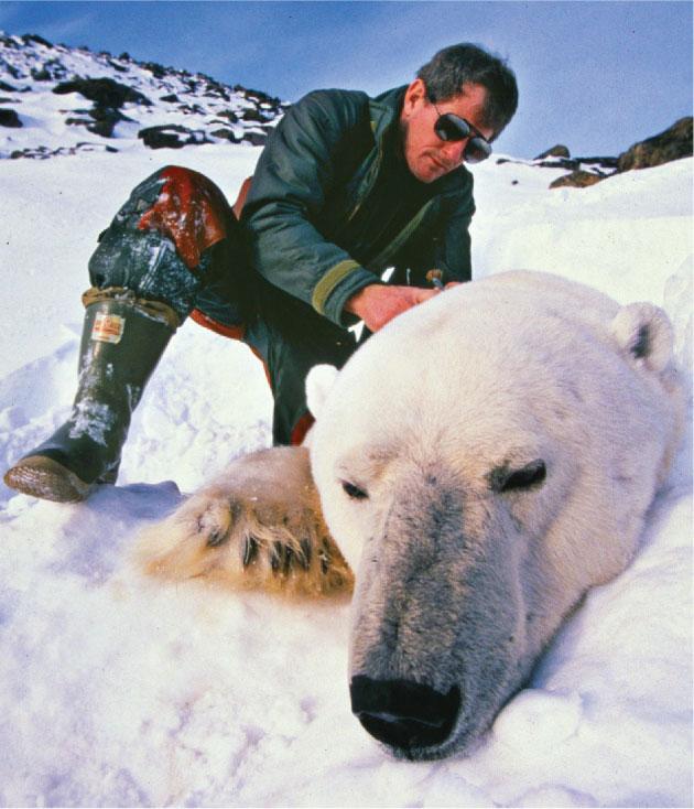 polar_bears_mitch_taylor