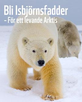 wwf isbjörn