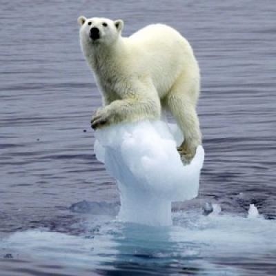 isbjörn fotoshop