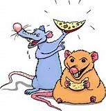 råttor frö