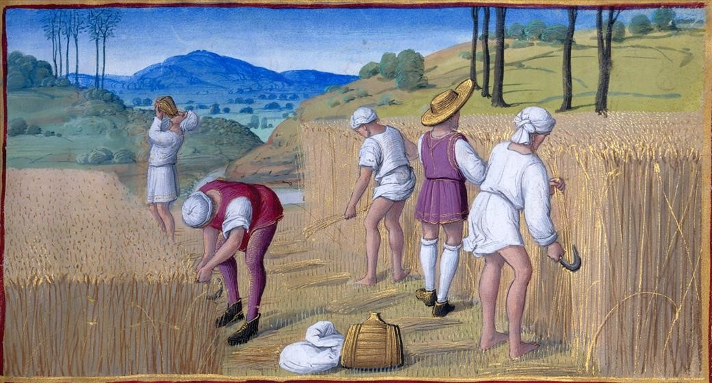 medeltid skörd