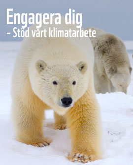 isbjorn_WWF2