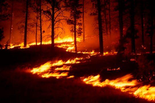 skogsbrand SMHI