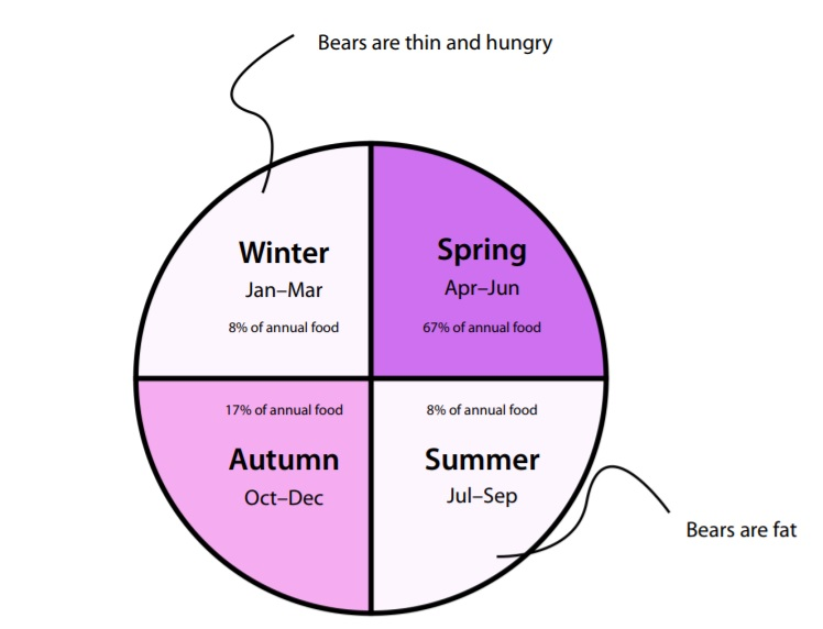 polar_bear_feeding