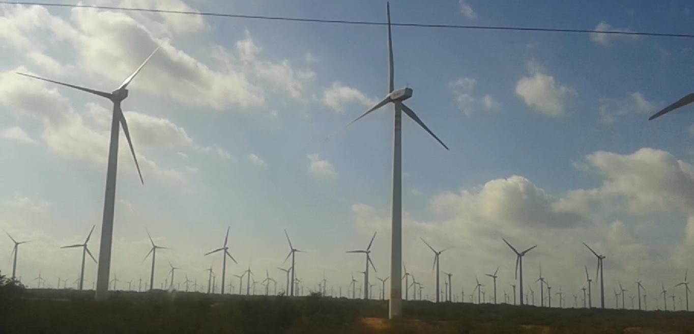 En skog med vindkraft i Mexico