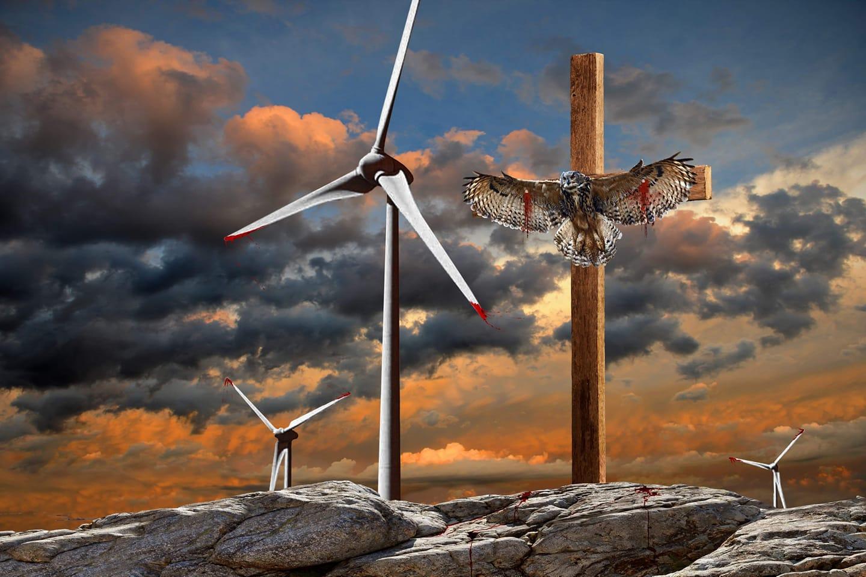 vindkraft dödar