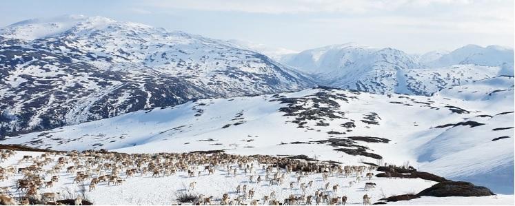 Norska fjäll