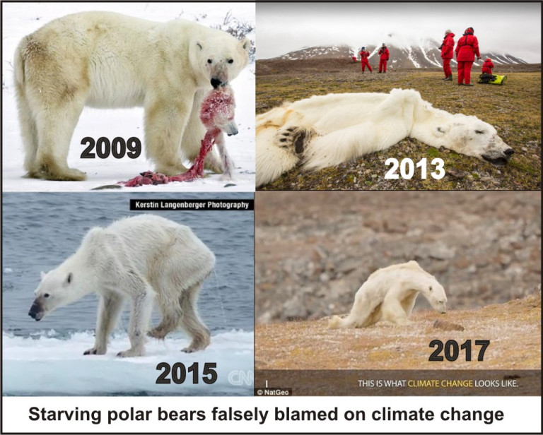 starving-polar-bear-composite