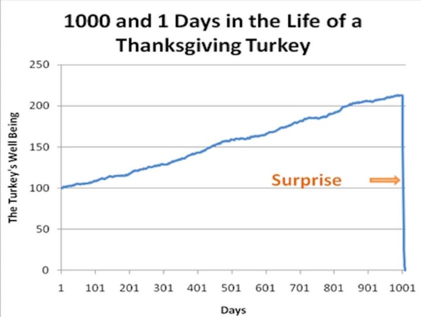 Black_swan_turkey